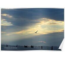 Seagull | Fire Island, New York  Poster