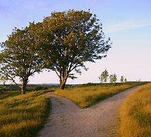 Two roads in a yellow wood by Fiona Crowe