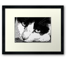 Pen and Ink Resting Cat Framed Print