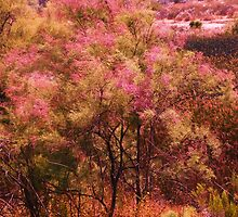 Pink Heaven at Lake Murray: by Cherubtree