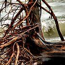 Pelee Driftwood by Barry W  King