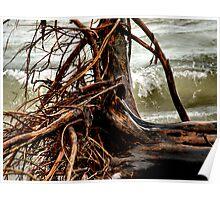 Pelee Driftwood Poster