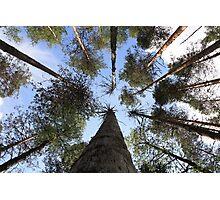Trees to Heaven Photographic Print