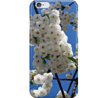 White Blossoms of Spring iPhone Case/Skin