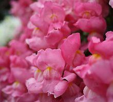 Nana's flowers by Amy  Matheson