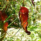 Signs of Autumn by RollZLX