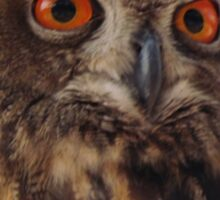 Eurasian Eagle Owl Sticker