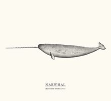 Narwhal by Sam Lyne
