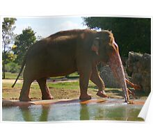 Elephant Fountain Poster