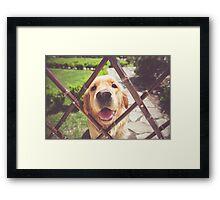 The Good Dog ! Labrador yellow dog Framed Print