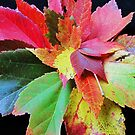 all about maple leaves by ANNABEL   S. ALENTON