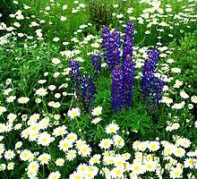 happy flowers by Gary Mannix