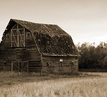 The Old Abandoned Barn by TracyL72