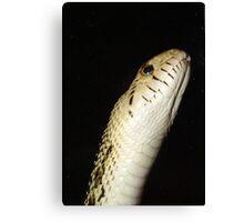 Snake!!! Canvas Print