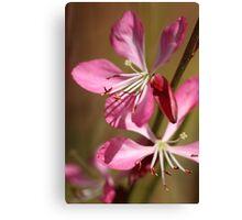 Warm Pink Dance Canvas Print