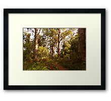 Walking through the valley of Giants Framed Print