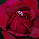 Loving The Rose by laureenr