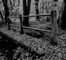Woodland Wonders by Mark Robson