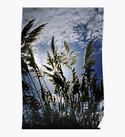 Pampas Silhouettes Poster