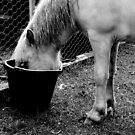 a little hoarse by Bronwen Hyde