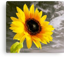 Hope against the background of life Canvas Print
