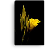 Yellow on Black Canvas Print