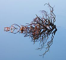 light on twigs reflected by Neil