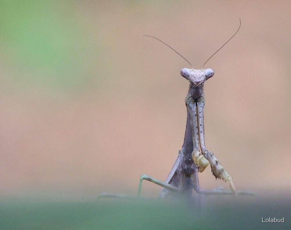 Mantis by Lolabud