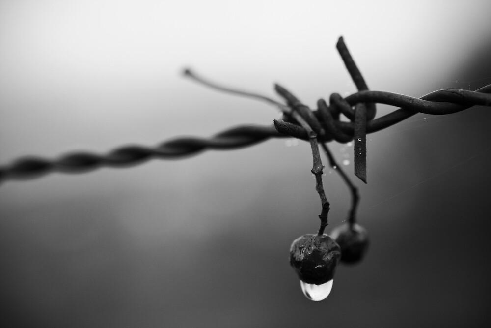 Is Hope gone? by Daniel Nahabedian