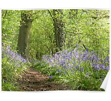 Bluebell Wood Cheshire in Spring Poster