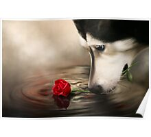 Dog with Rose - Shelter Art Poster