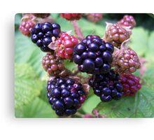 Ripe Blackberries Canvas Print