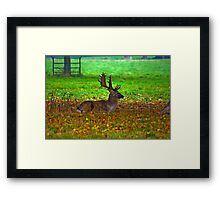 Fallow Stag Resting Framed Print