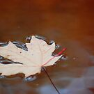 Silent Fall by mwfoster