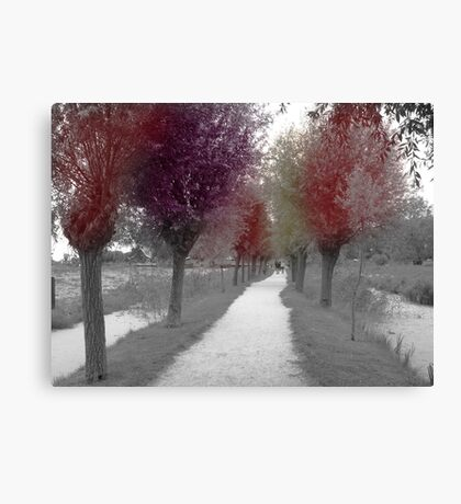 Colours of trees Canvas Print