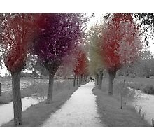 Colours of trees Photographic Print
