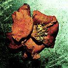 ether flower by tymzsy