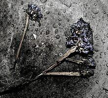 concrete flower by tymzsy