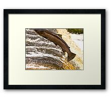 Fighting Upstream Framed Print