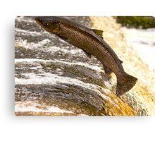 Fighting Upstream Canvas Print