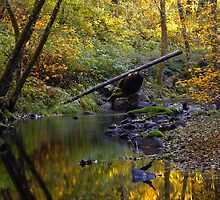 Whittaker Creek, autumn by Allan  Erickson