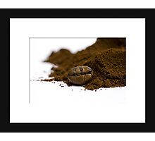 Coffee bean Photographic Print
