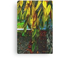 Coat of Many Colors Canvas Print