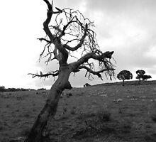 last trees by Naia