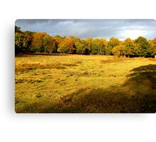 Autumn in the New Forest Canvas Print