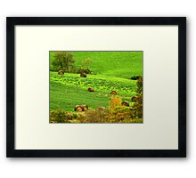 Bale Me Out! Framed Print