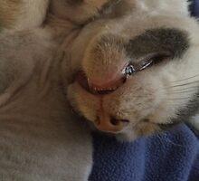 Kitty Teeth by silverdragon