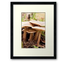 In amongst the undergrowth Framed Print