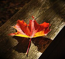 Fallen Leaf by Ray4cam