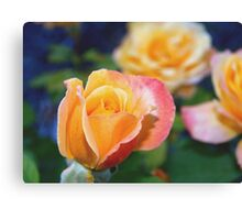 Yellow and pink-tinged roses Canvas Print